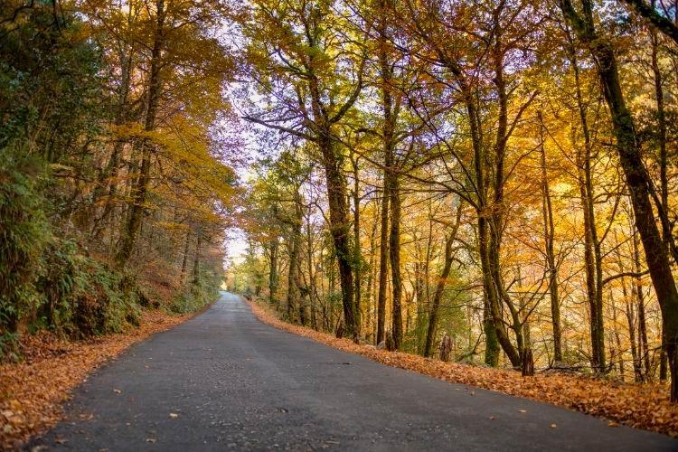 Autumn Fall in Portugal